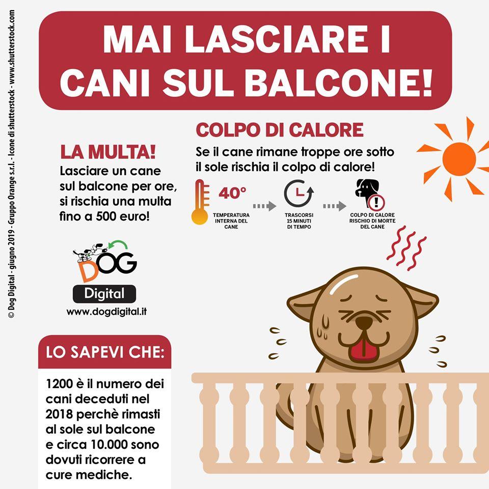 Non bisogna mai lasciare i cani sul balcone. Oltre a rischiare una multa salata fino a 500 euro, potremmo esporre il nostro amico a quattro zampe a un pericolosissimo colpo di calore!