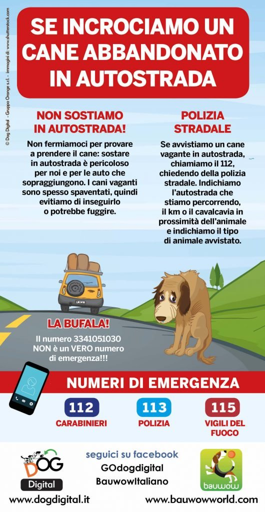 Infografica che descrive cosa fare se incrociamo un cane abbandonato in autostrada